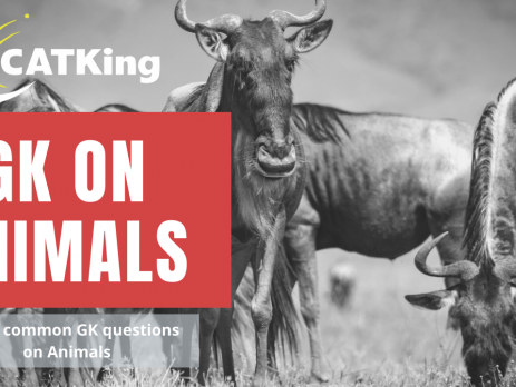 CATKing GK on Animals